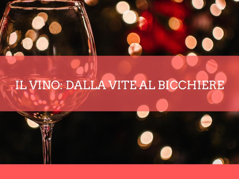 Il vino: dalla vite al bicchiere - Accademia d'impresa